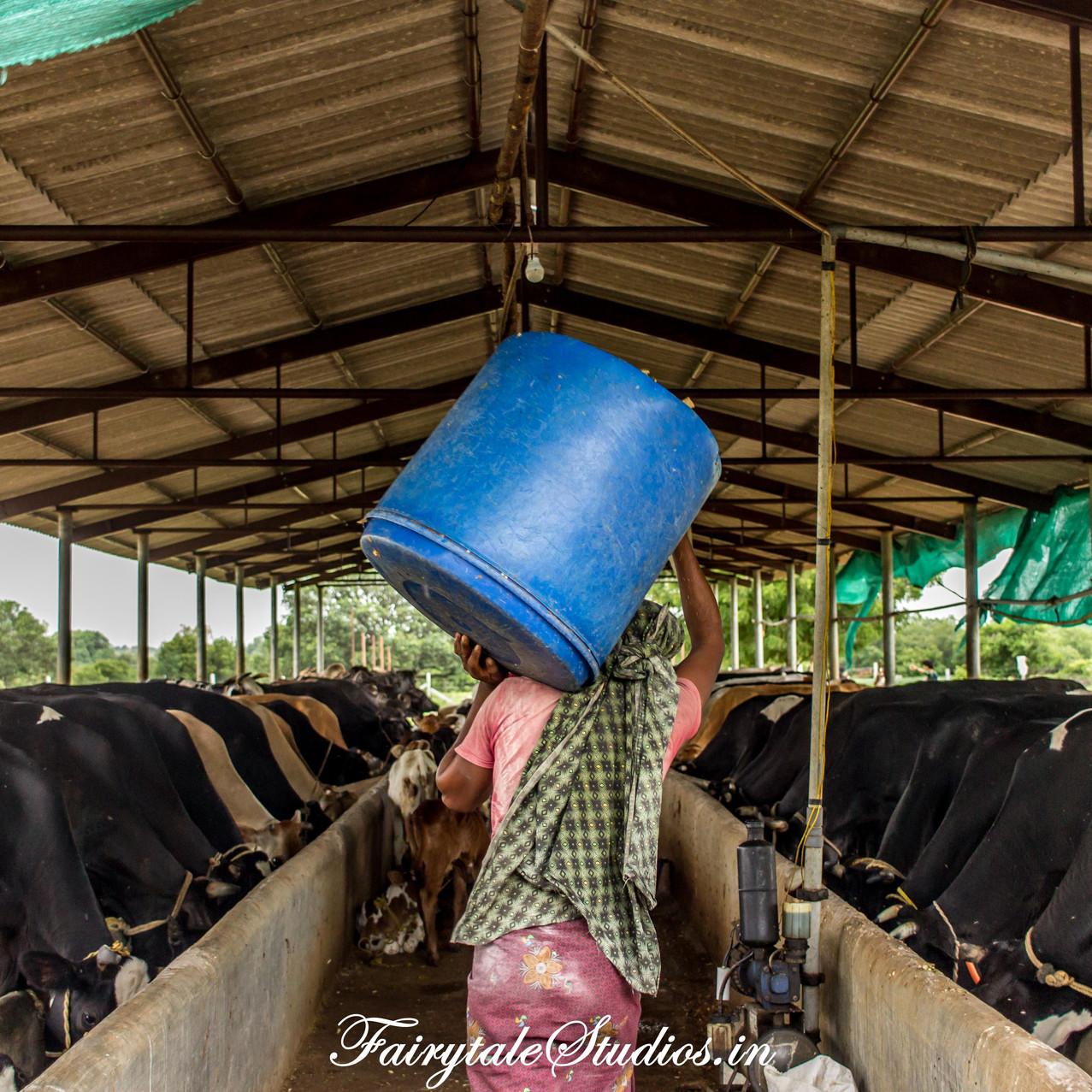 Fairytale Travels_Sids Farm (152)