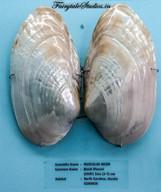 Seashell Museum_Mahabalipuram_Fairytale Travel Blog (14)