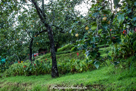 Property_Pear County Kodaikanal_Fairytale Travels (15)