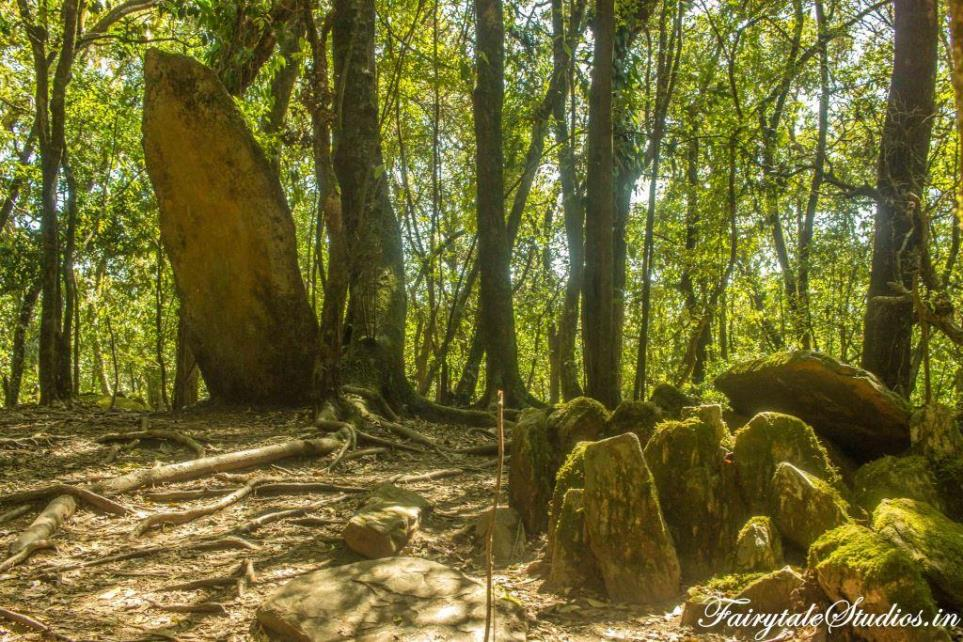 Sacred Grove forest_Mawphlang travel guide_The Meghalaya Odyssey_Fairytale Travels (4)