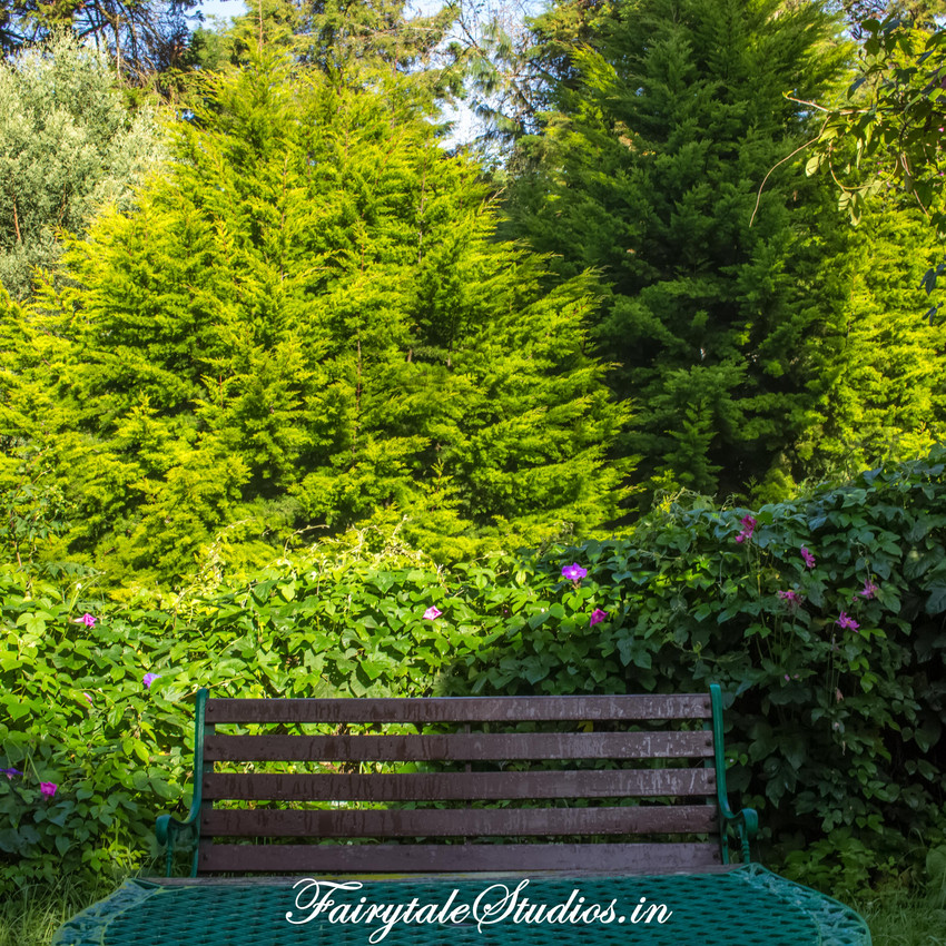 Gardens_Fern Creek Kodaikanal_Fairytale Travels (46)