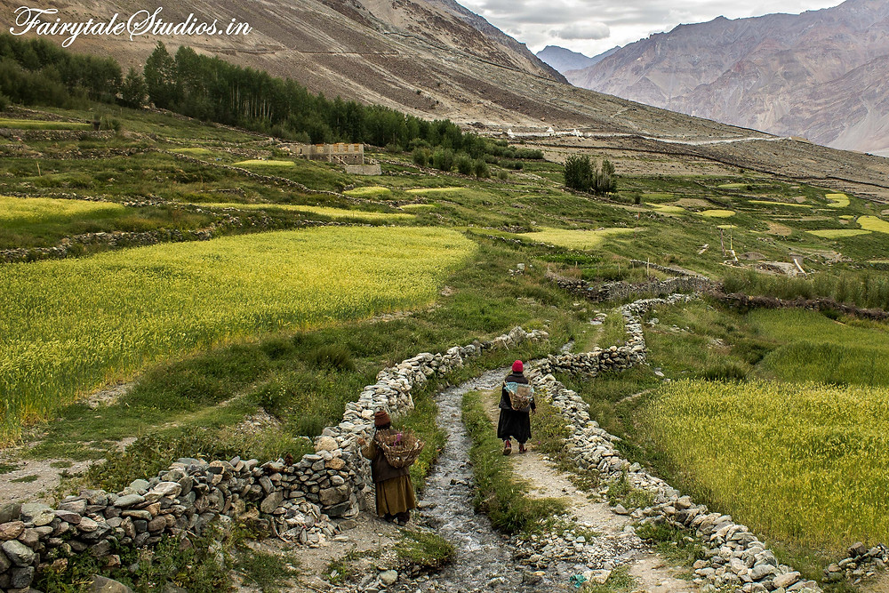 2 old woman walking along a fresh water stream on their way to fields to work in Karsha Village near Padum (The Zanskar Odyssey travelogue)