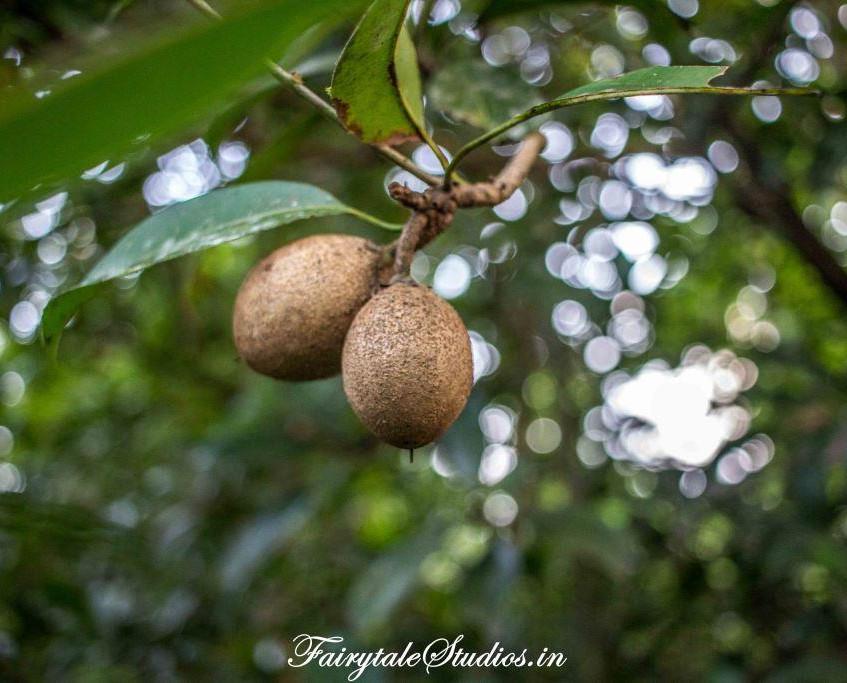 Spice Tour_Dudhsagar Plantation spice fa