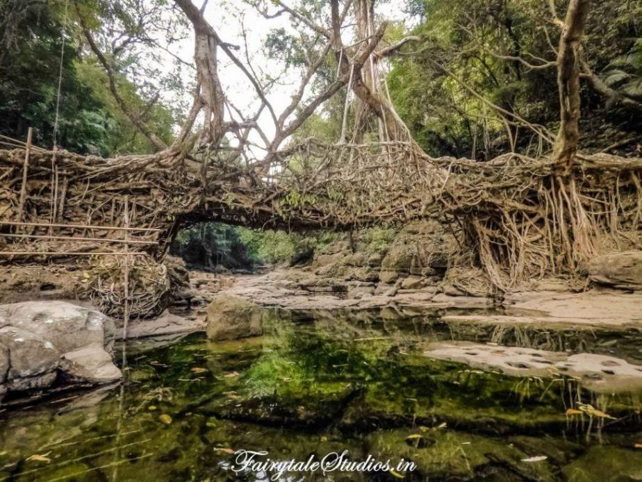 Single decker living root bridge in Riwai