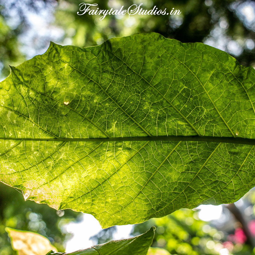 Nature_Fern Creek Kodaikanal_Fairytale Travels (15)