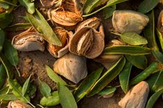 MANGIA BEDDA – LIVING IN A TIME OF ALMONDS