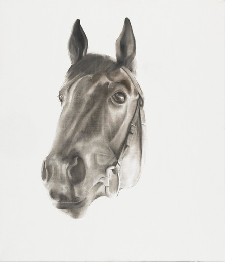 Horse Head Portrait of Three Year Old Racehorse