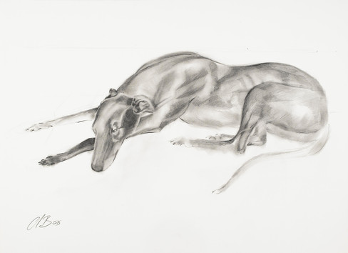 Greyhound IV