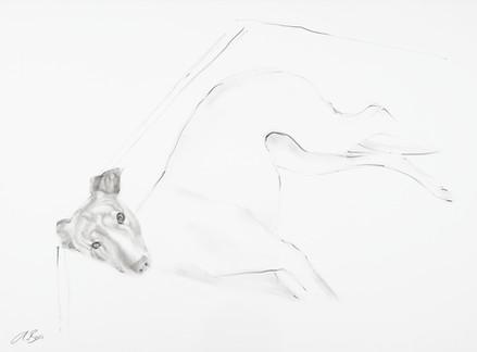 Greyhound V