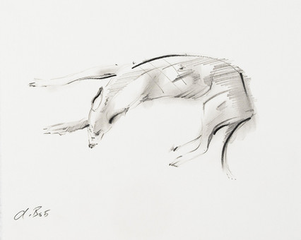 Greyhound Sketch J