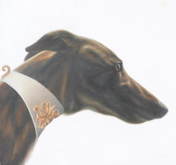 Greyhound Tuscana