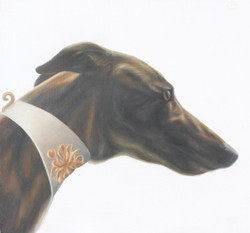 Greyhound (Tuscana) 5