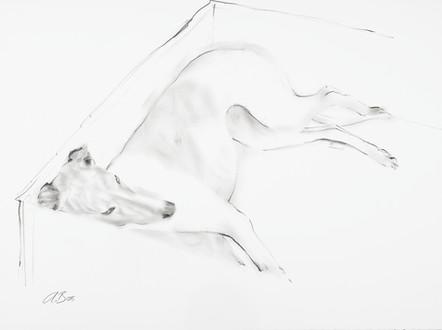 Greyhound III