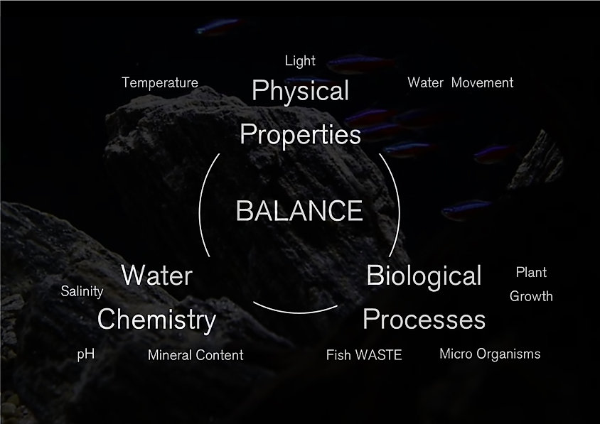 videre ecosystems midel1.jpg