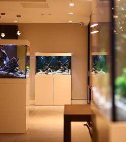 Videre Aquarium Right Frame URL Picture