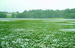 Lough Corrib Ireland After Infestation