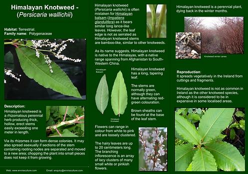 Himalayan Knotweed -Persicaria wallichiiID Guide