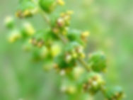 Biodiversity Medium Risk 17