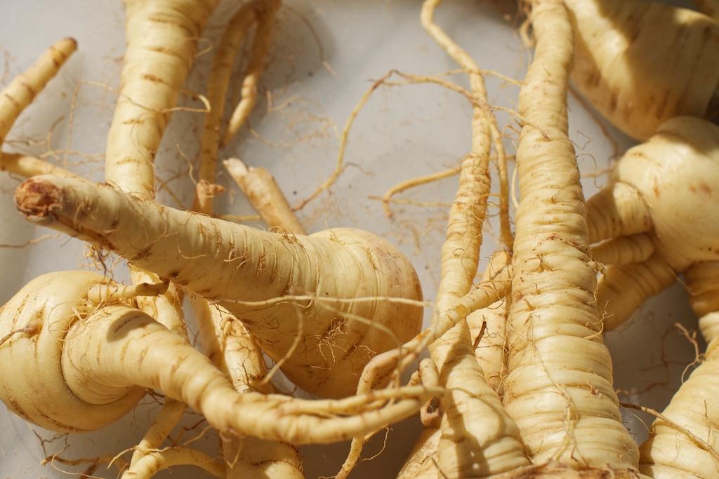 Wild parsnip - Pastinaca sativa 32