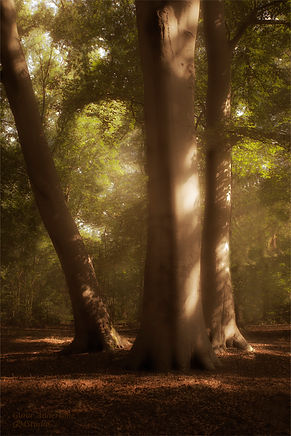 guna andersone gmstudio sunny forest 1 w