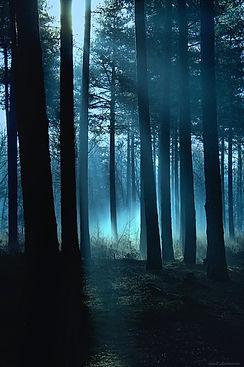 gunadesign guna andersone haunted forest