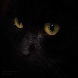 gundadesign-guna-andersone-black-cat.jpg