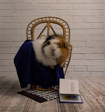guna andersone gmstudio guinea pig book_