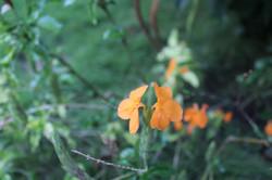 Orange flower at Karibuni