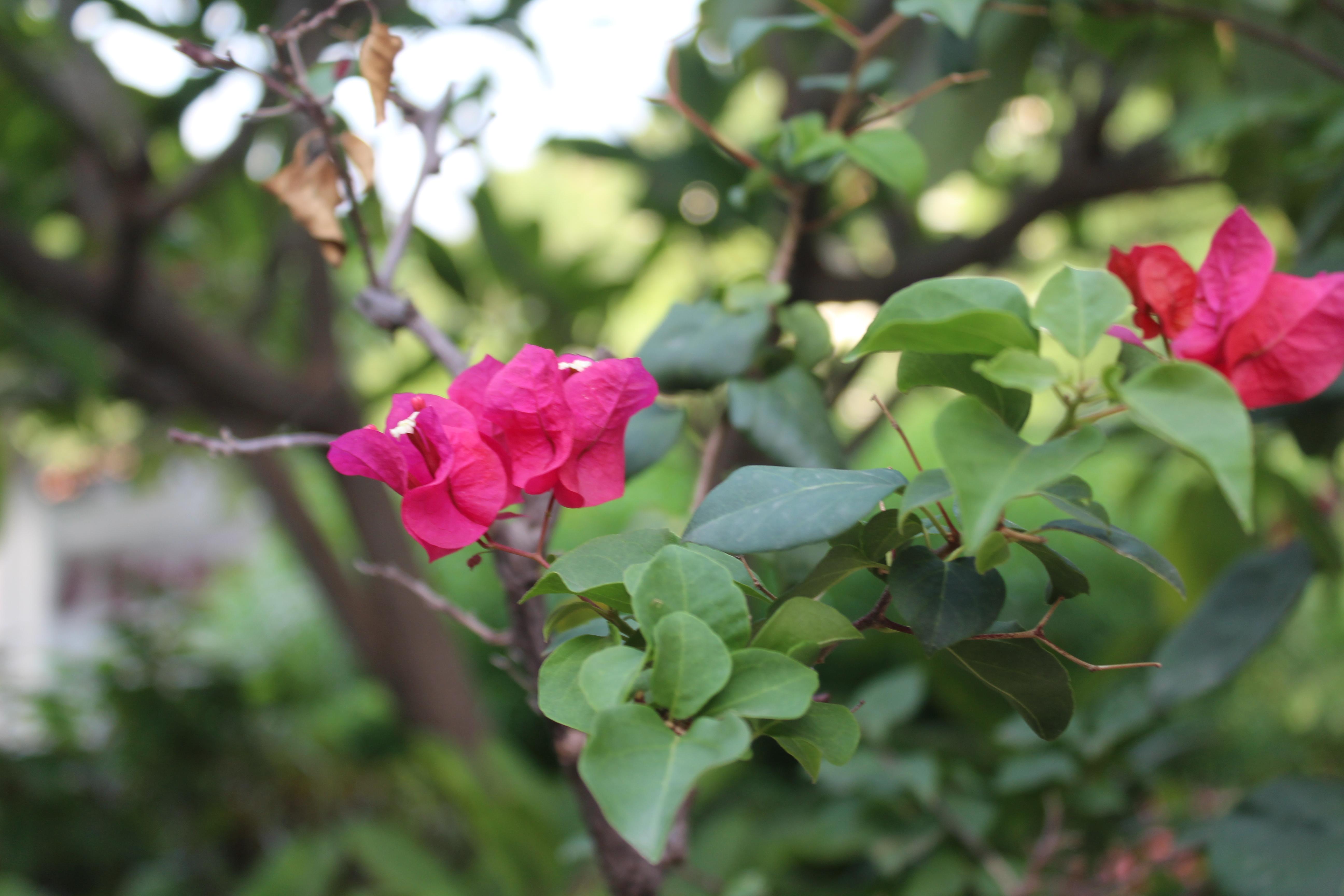 Flowers in Karibuni garden