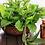 Thumbnail: WILD MINT & EUCALYPTUS