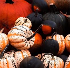 Wolfgang_and_Isabella_PF_Pumpkin_Spice_S