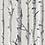 Thumbnail: WHITE BIRCH TRAVEL TIN
