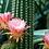 Thumbnail: DESERT FLOWER