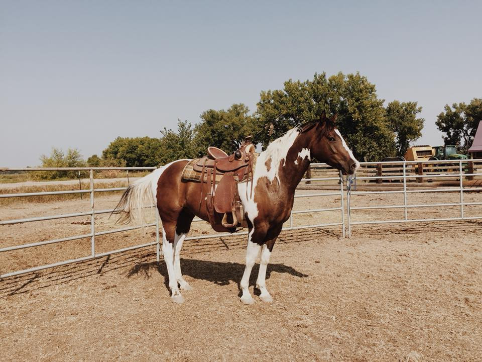 horse-western-training-cowgirl-paint