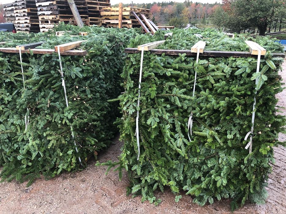 Balsam fir bough brush