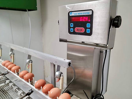 Egg weigh scale