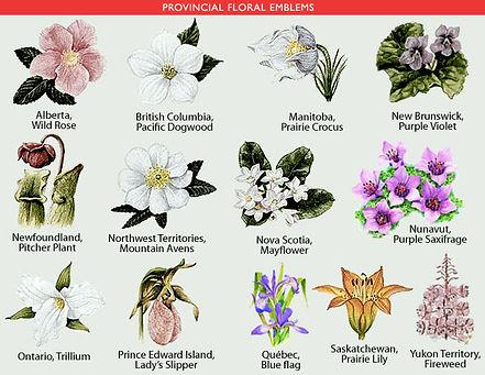 canada flowers.jpg