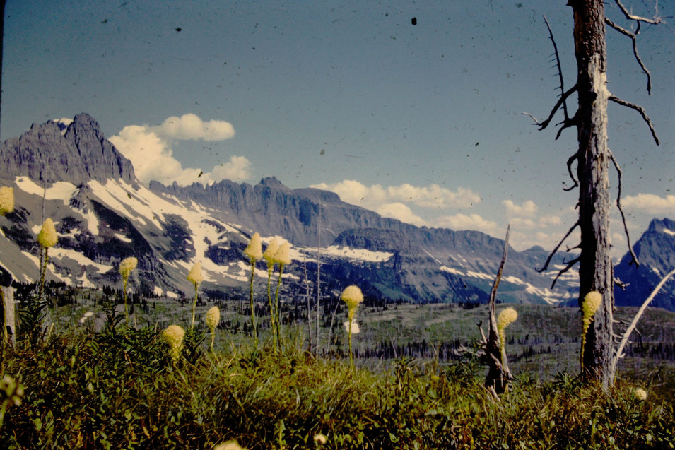 Glacier and Bear Grass