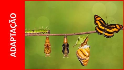 Capacidade de adaptação: Qual a sua importância para você e as empresas?