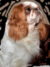 Lion_Stamíra_1.png
