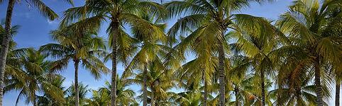palm tees