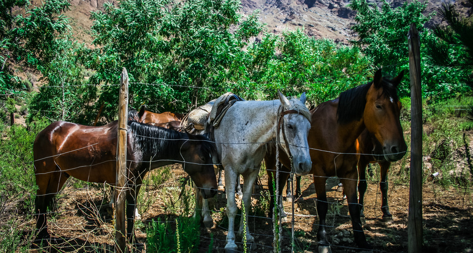 Out beautiful horses