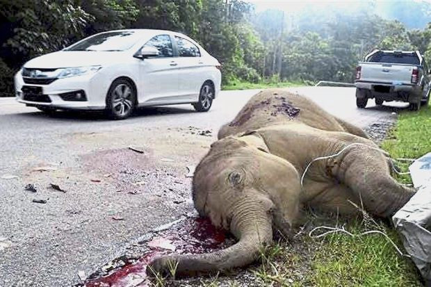 Baby elephant killed in highway accident