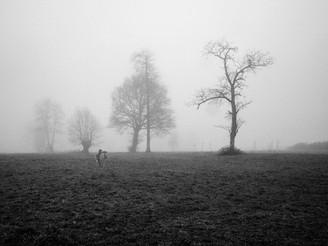 Le photographe #1, 2016