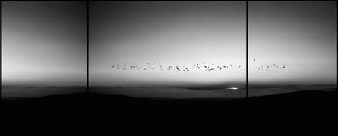 Silence, 2014