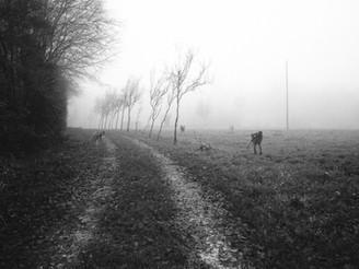 Le photographe #3, 2016