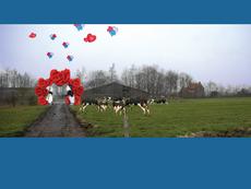 """Event """"Crazy Cows"""""""