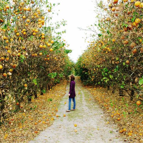 OrangeGrove+copy.jpg