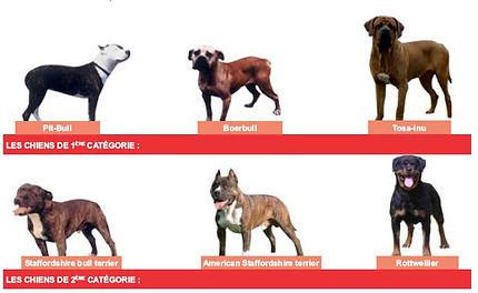 chiens-catégorie-1-2.jpg