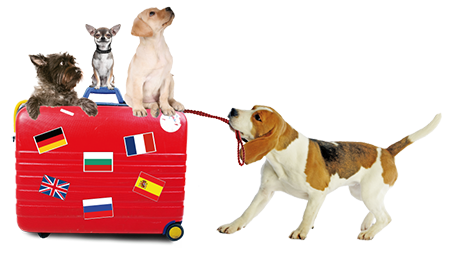 valise-chien-1.png